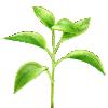 plantes phytotherapie